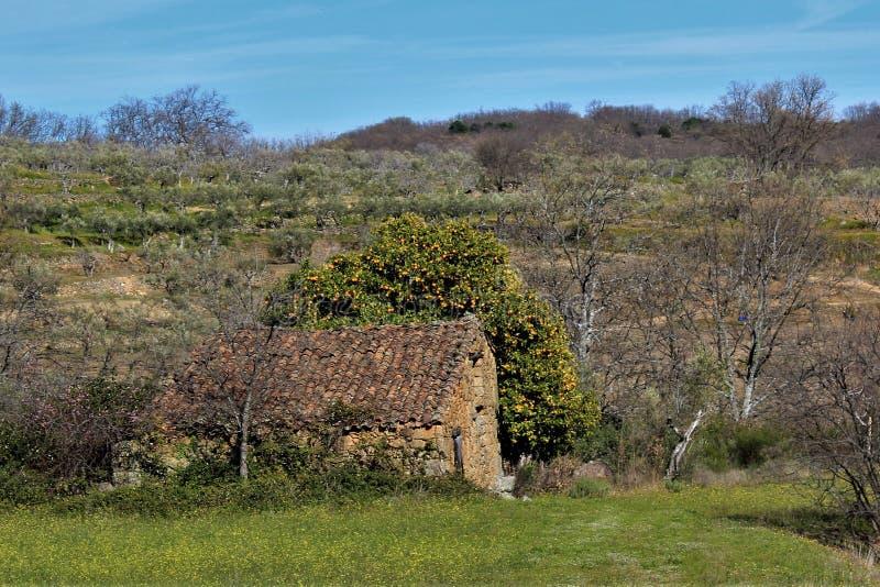Casa de campo con un árbol anaranjado fotografía de archivo