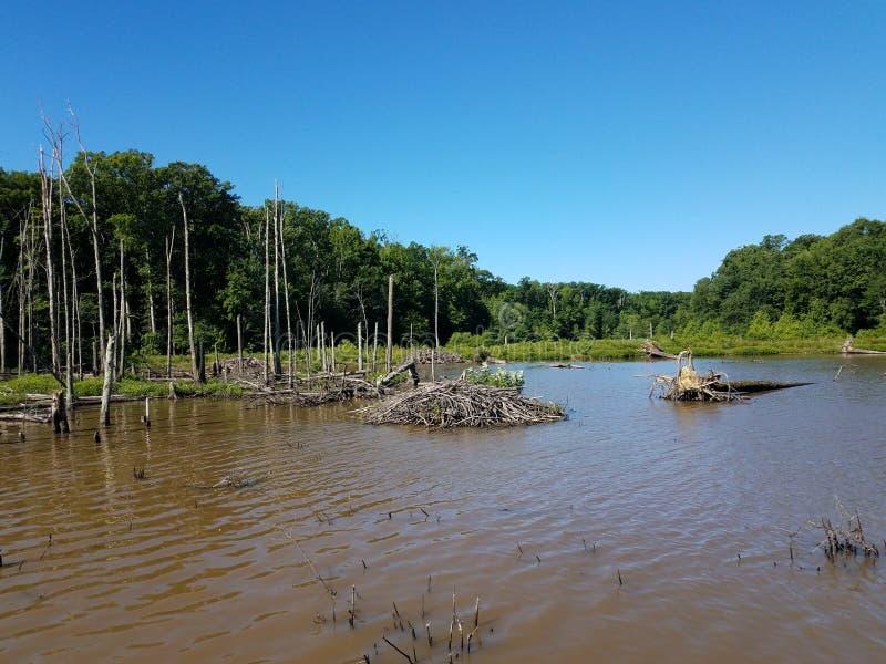 Casa de campo del castor en el lago o la charca con los árboles foto de archivo