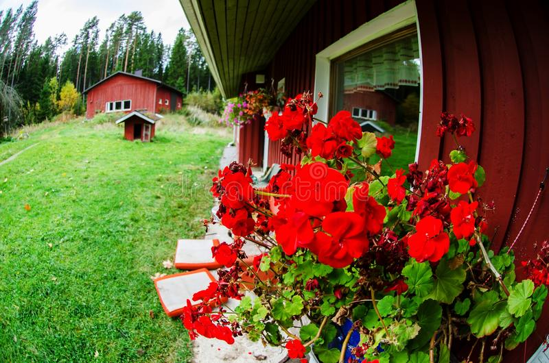 Casa de campo finlandesa tradicional com flores fotografia de stock royalty free