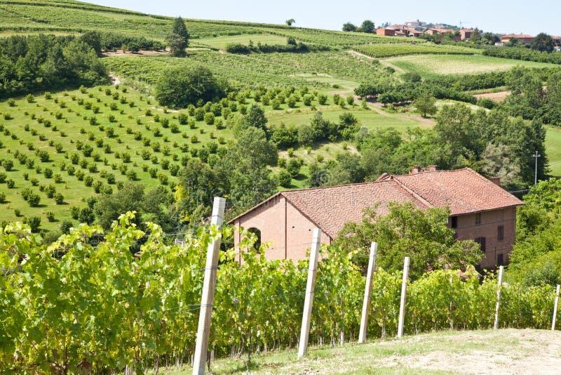 Casa de campo italiana com vinhedo: estação de mola fotografia de stock