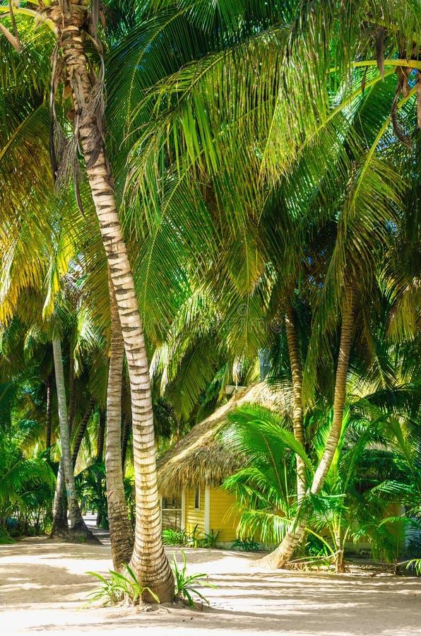 Casa de campo de madeira amarela escondida entre a ilha das Caraíbas alta das palmeiras imagem de stock royalty free