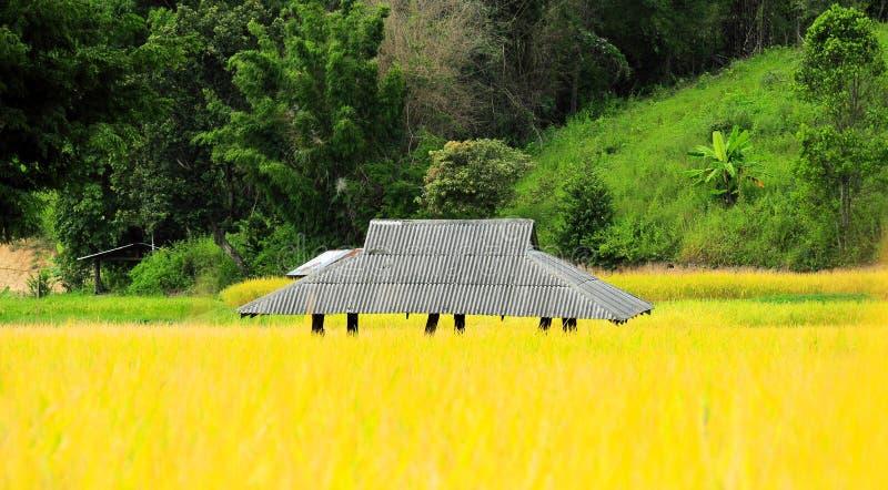 Casa de campo na exploração agrícola do arroz imagens de stock