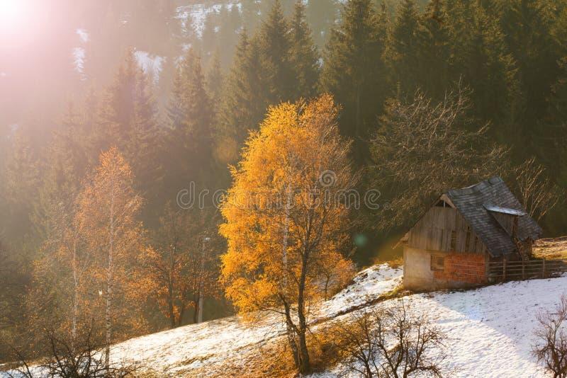 Casa de campo rural no inverno no campo no pinho e no vidoeiro para foto de stock