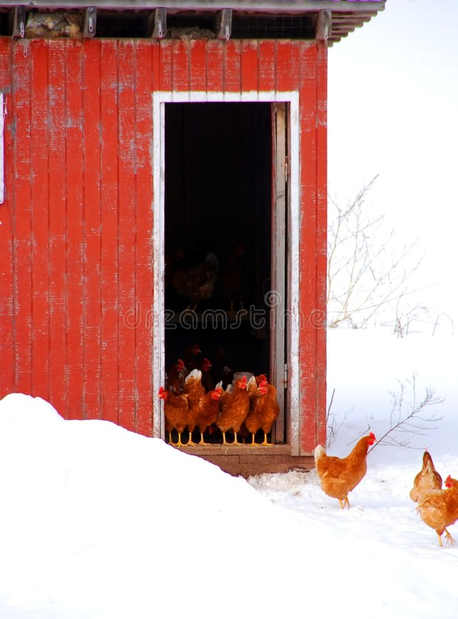 Casa de galinha fotos de stock royalty free