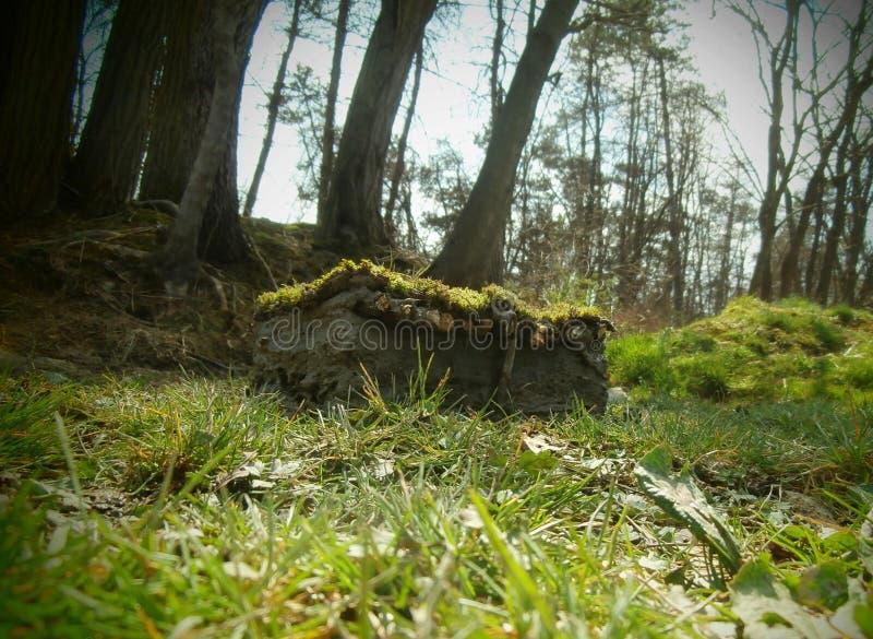 Casa de hadas en el bosque foto de archivo libre de regalías