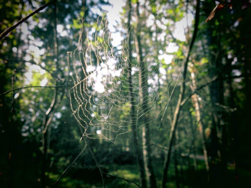 Casa de la araña imagen de archivo libre de regalías