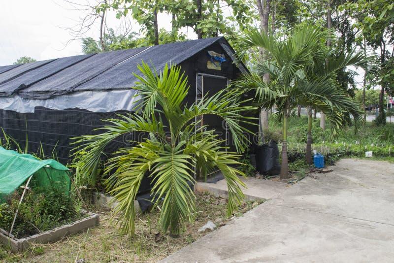 Download Casa de la seta foto de archivo. Imagen de nutrición - 42434740