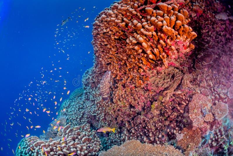 Casa de los corales de Maldivas para los pescados imagen de archivo
