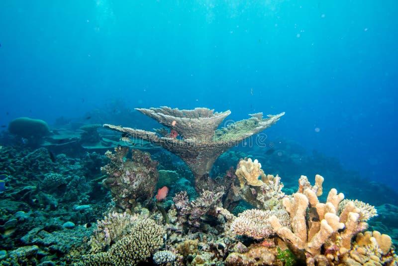 Casa de los corales de Maldivas para los pescados fotografía de archivo libre de regalías
