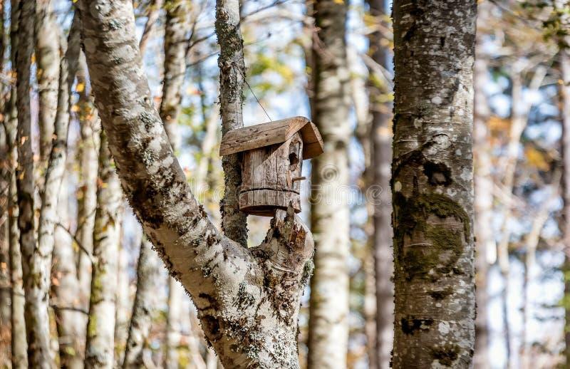 Casa de madeira do pássaro na árvore nas madeiras imagem de stock