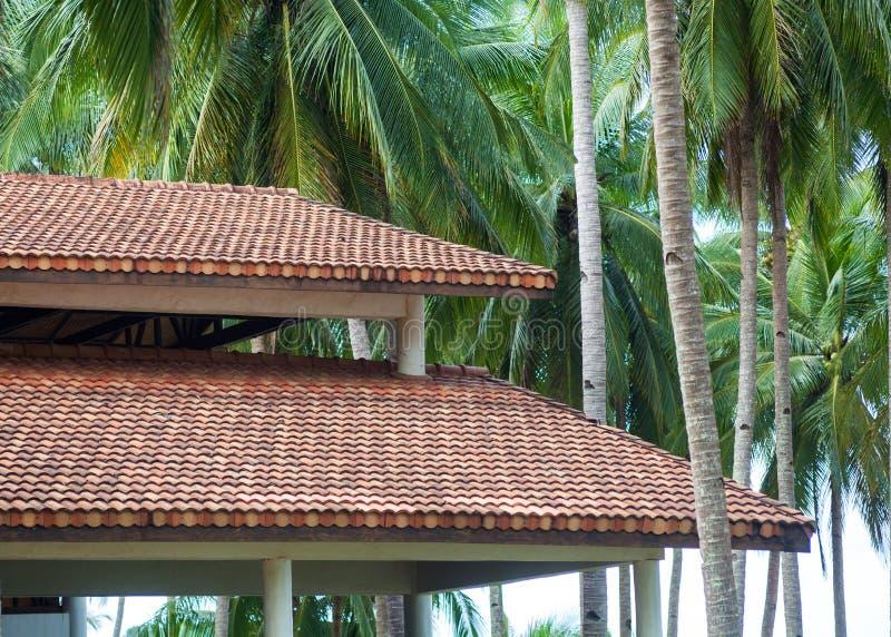 Casa de madeira moderna com o telhado de telha da argila vermelha na perspectiva das palmeiras Construção do telhado imagem de stock