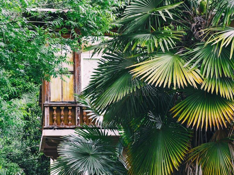 Casa de madeira na floresta tropical com folhas de palmeira imagens de stock