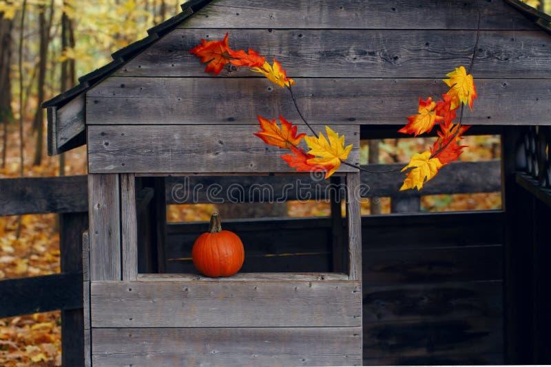 A casa de madeira velha da exploração agrícola com a abóbora alaranjada na janela e no autmn vermelho amarelo sae da decoração, c imagens de stock royalty free
