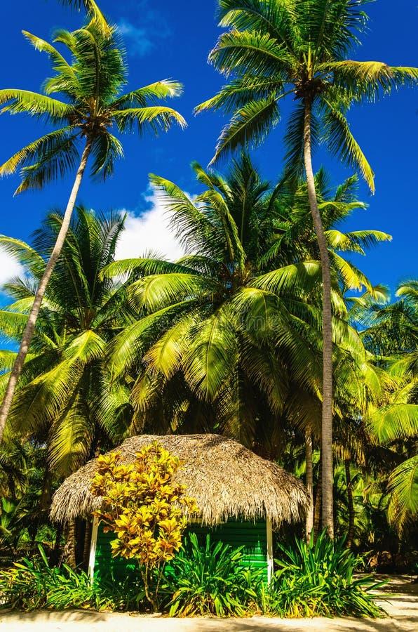 Casa de madeira verde em ilhas das Caraíbas selvagens da ilha do beachof exótico fotografia de stock royalty free