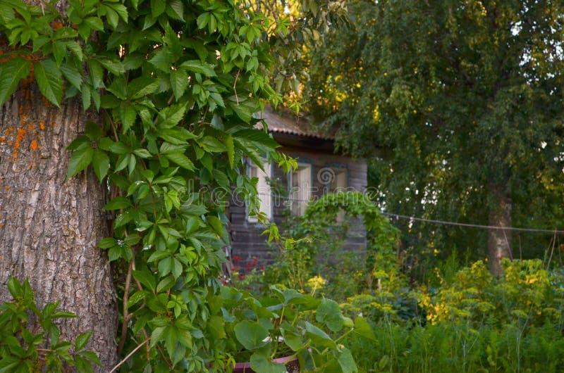 Casa de madera con las ventanas talladas en Vologda Rusia Estilo ruso en arquitectura Casa rusa r?stica con el jard?n fotografía de archivo libre de regalías