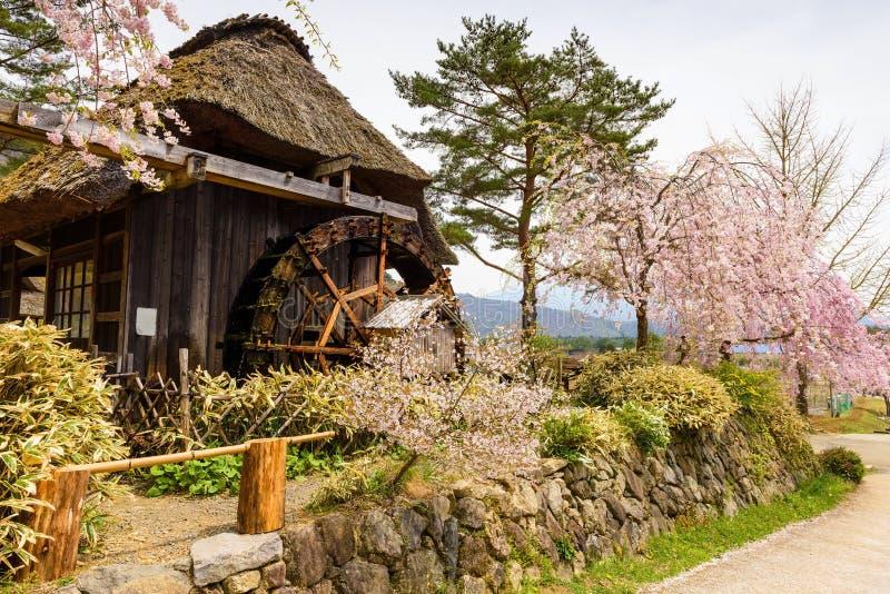 Casa de madera cubierta con paja con la flor de cerezo rosada imagen de archivo