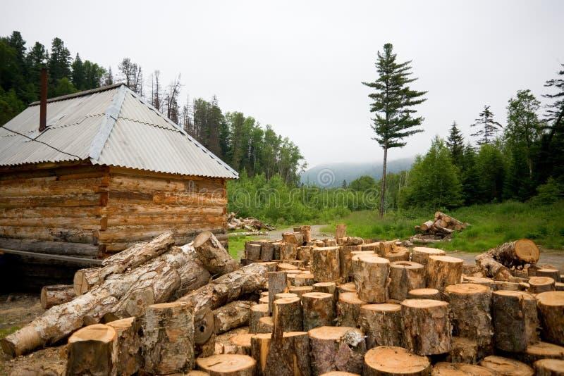 Casa de madera en un bosque conífero. imagen de archivo