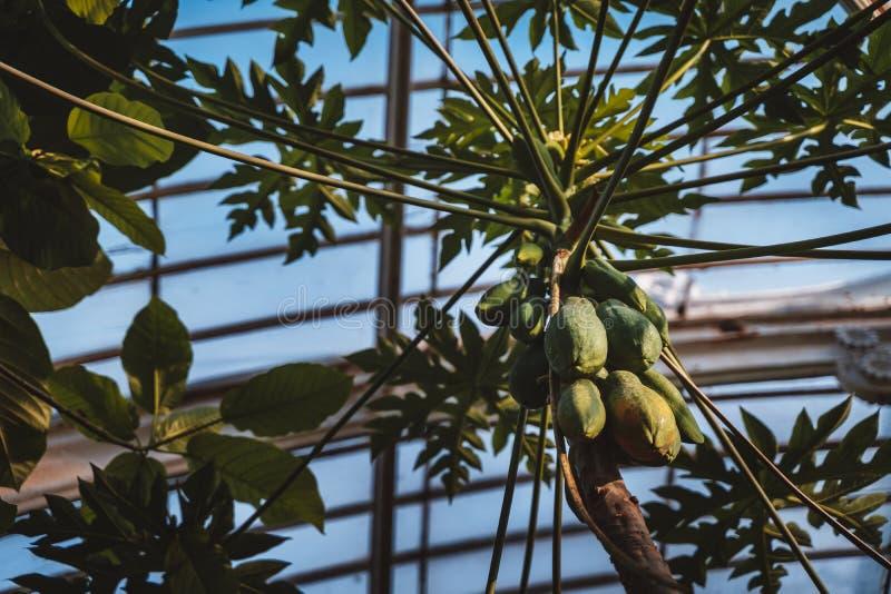 Casa de palma, jardins de Kew no inverno/outono foto de stock