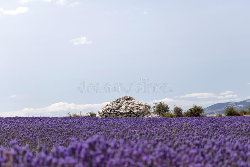 Casa de pedra da pilha no meio do campo roxo vívido colorido da alfazema em Provence, França fotografia de stock
