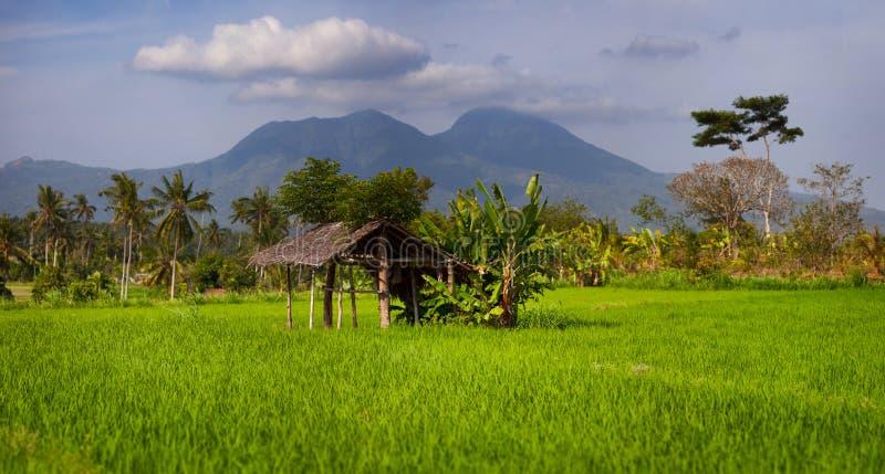Casa de resto protegida em um campo asiático do arroz foto de stock