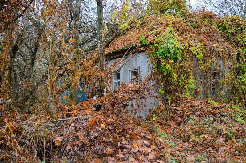 Casa de um só andar abandonada nos arvoredos na rua anterior na zona de exclusão de Chernobyl Chernobyl, Ucrânia foto de stock