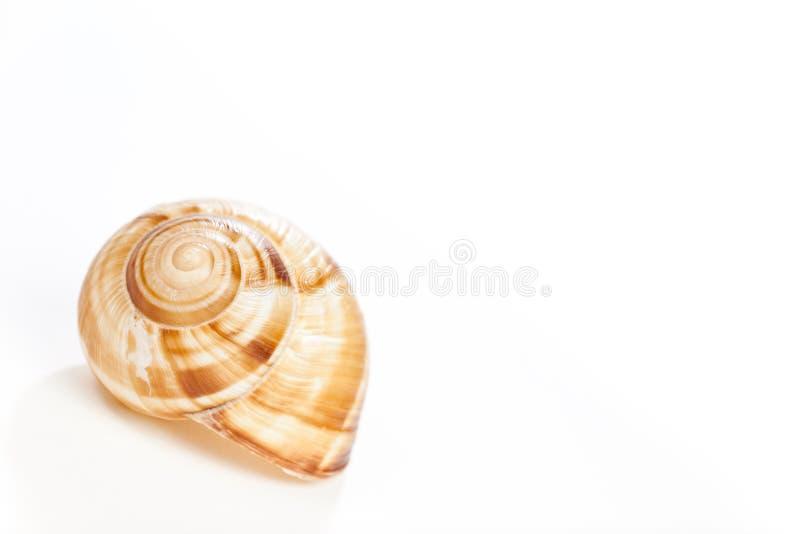 Casa del caracol en blanco fotografía de archivo libre de regalías