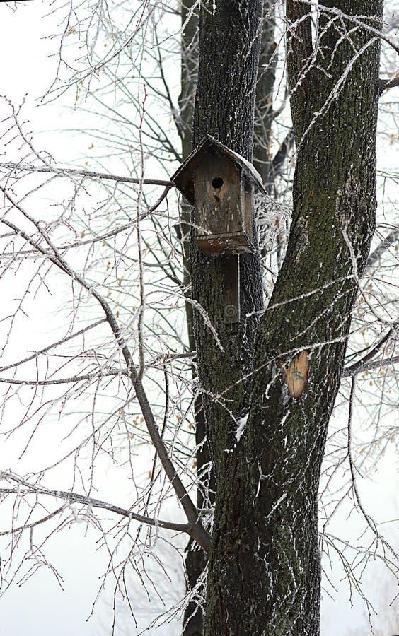 Casa del pájaro en invierno fotos de archivo libres de regalías