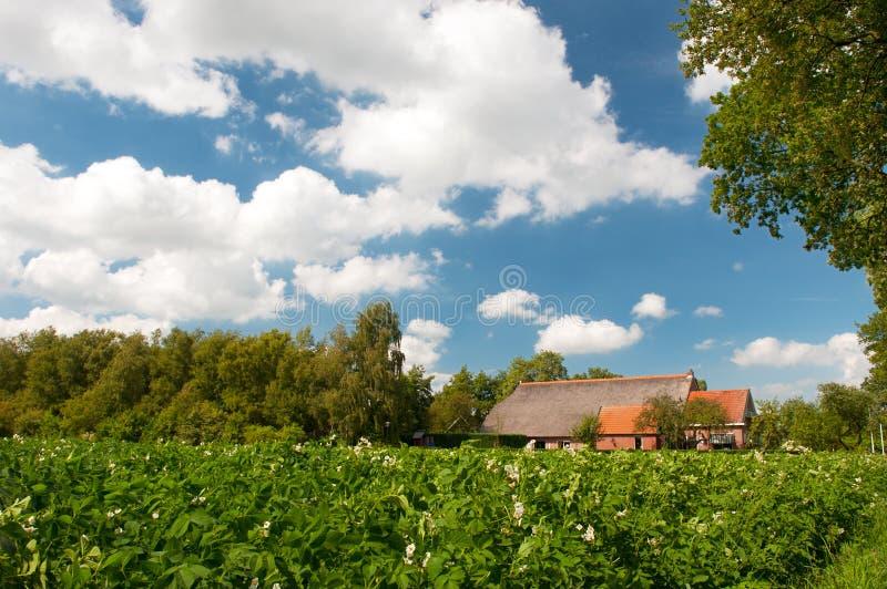 Casa dell'azienda agricola nel paesaggio con le patate fotografia stock libera da diritti