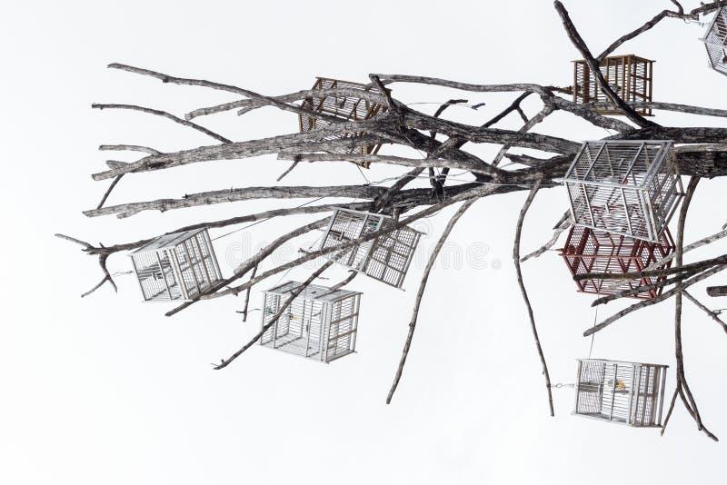 Casa dell'uccello di Variour con l'albero morto. fotografie stock libere da diritti