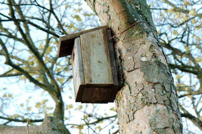 Casa dell'uccello in un albero immagini stock