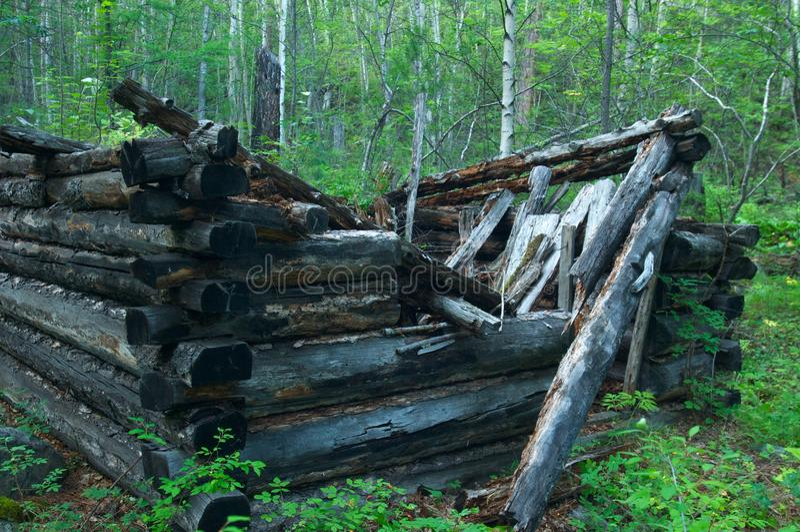 Casa destruida de la barra en el bosque del alerce imágenes de archivo libres de regalías