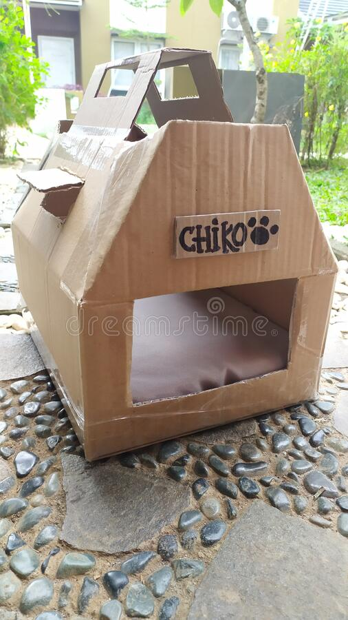 Casa di Chiko Kitten fotografia stock libera da diritti