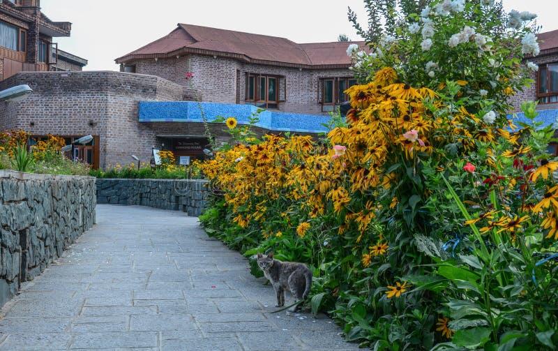 Casa di estate con il giardino floreale fotografia stock libera da diritti