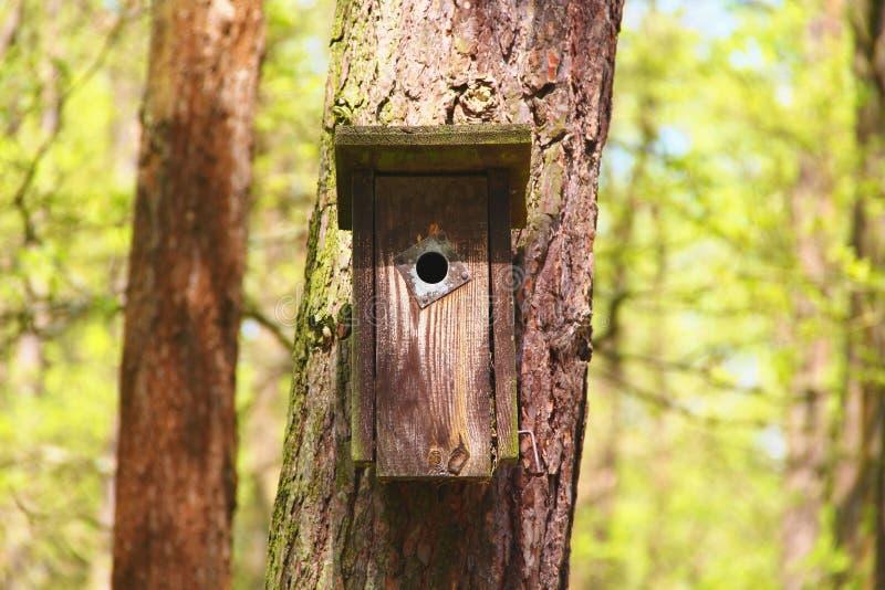 Casa di legno dell'uccello fotografia stock libera da diritti