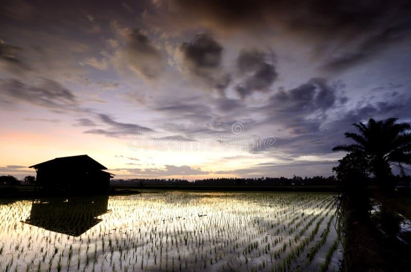 Casa di legno dilapidata in mezzo alla risaia sopra il bello fondo di alba fotografie stock