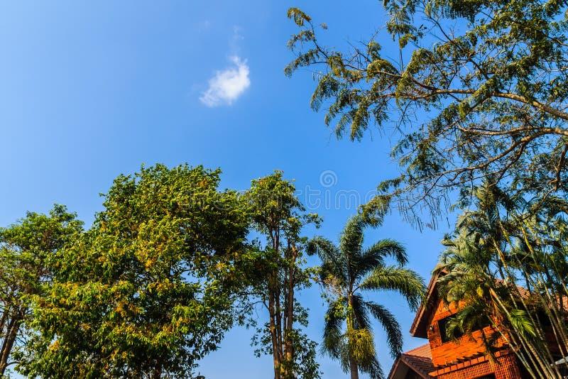 Casa di legno nel paese con gli alberi ed il fondo verdi del cielo blu Sguardo in su fotografia stock libera da diritti