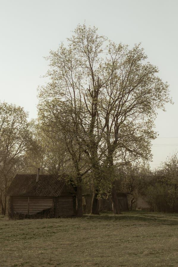 Casa di legno tradizionale nella scena dell'ambiente naturale immagini stock