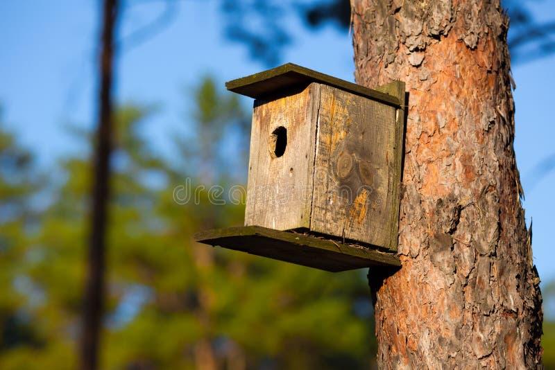 Casa di Starling in foresta fotografia stock libera da diritti
