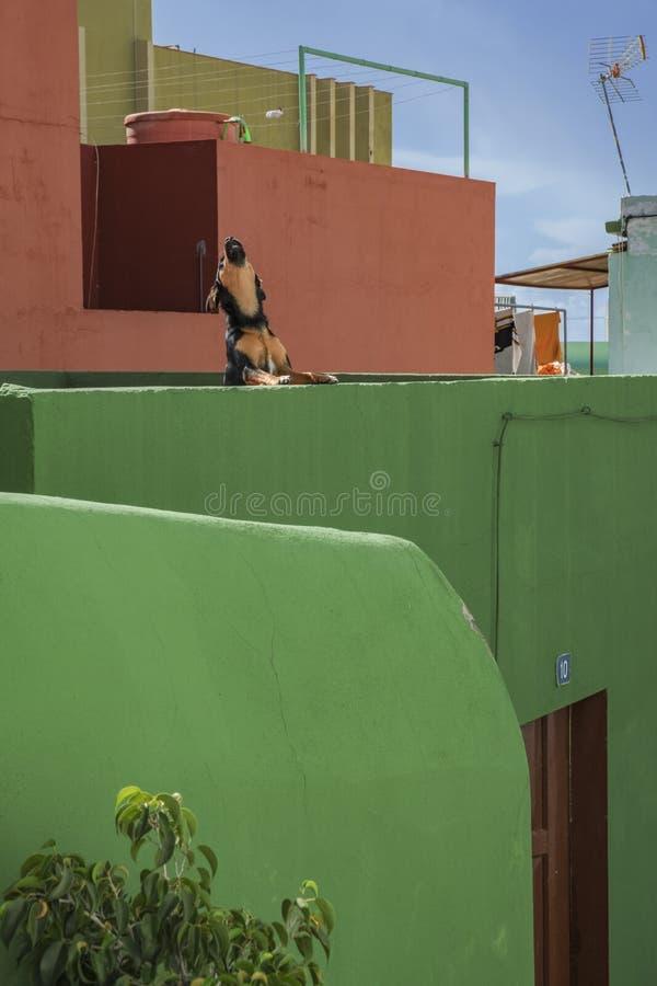 Casa di Tazacorte di palma della La vecchia con il cane fotografie stock libere da diritti