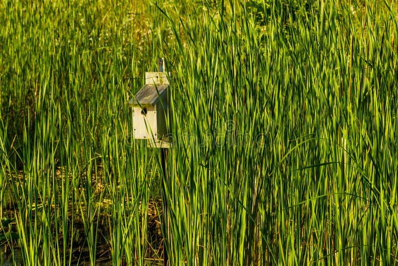 Casa do pássaro em um polo no parque imagens de stock royalty free