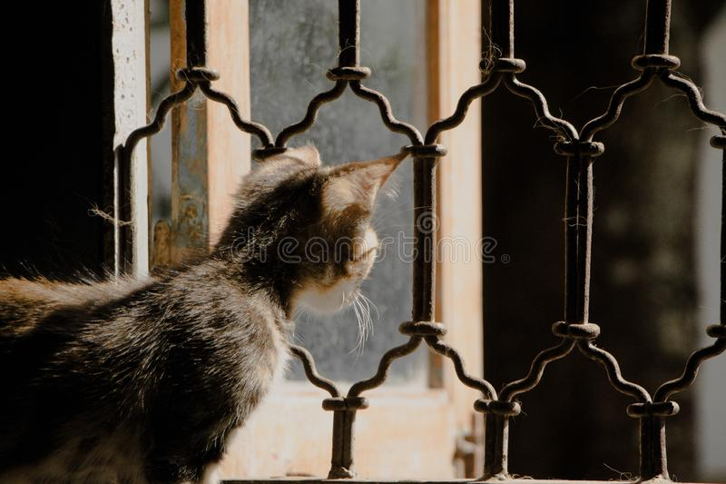 Casa do watchout do gatinho imagem de stock