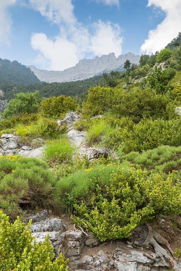 Casa dos deuses gregos, o Monte Olimpo com Mytikas máximo, Grécia, fotografia de stock royalty free
