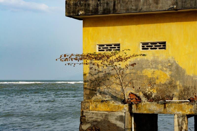 Casa em pernas de pau no mar aberto árvore solitário crescida no foto de stock