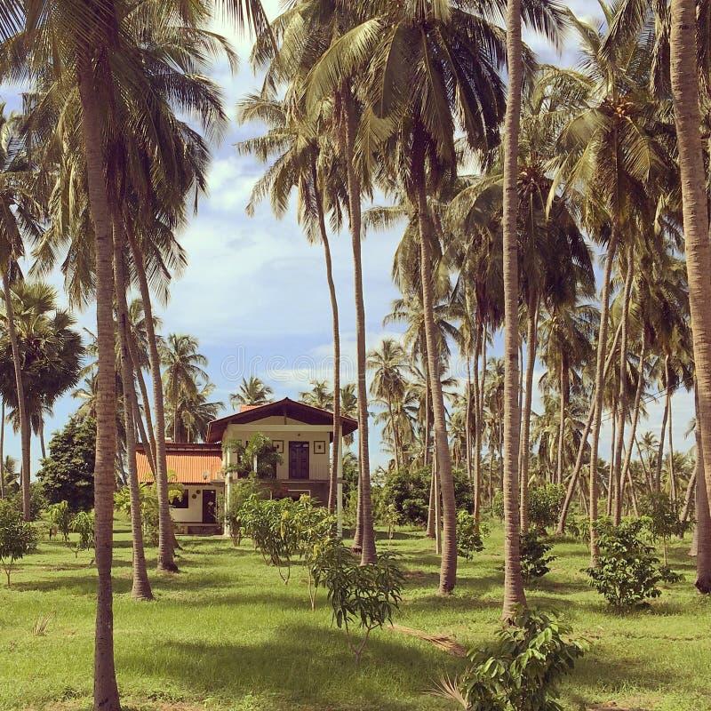 Casa em um bosque da palma imagem de stock