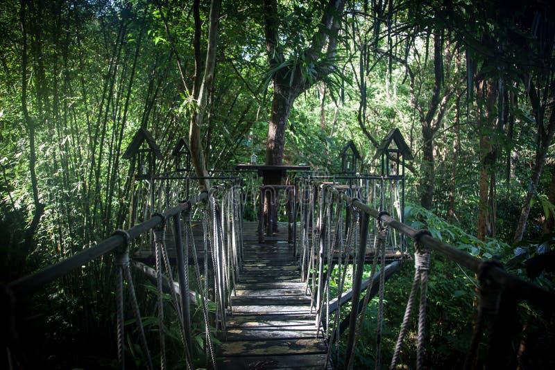 Casa em uma árvore na selva foto de stock royalty free