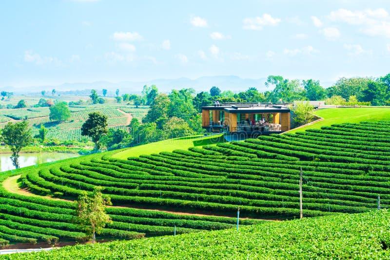 Casa en la plantación de té imagen de archivo libre de regalías