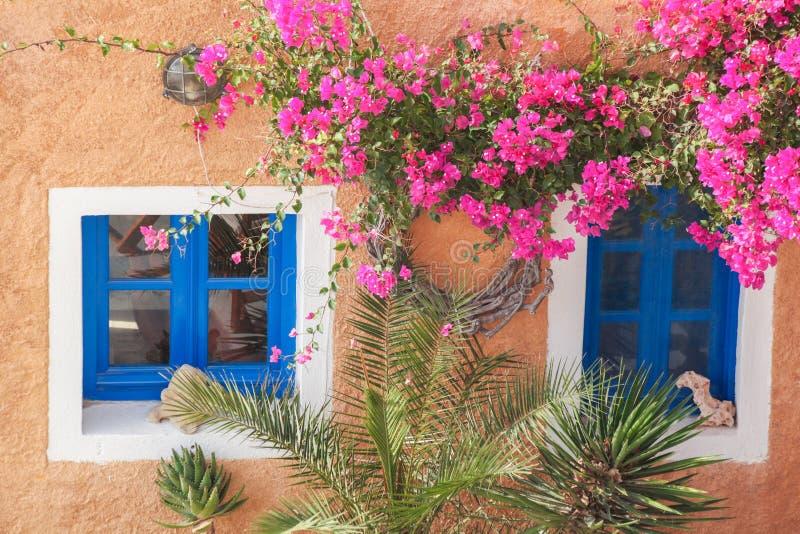Casa grega tradicional com as flores na vila de Oia na ilha de Santorini, Grécia foto de stock