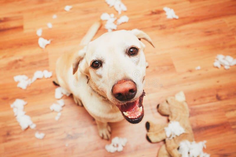 Casa impertinente do cão apenas fotografia de stock royalty free
