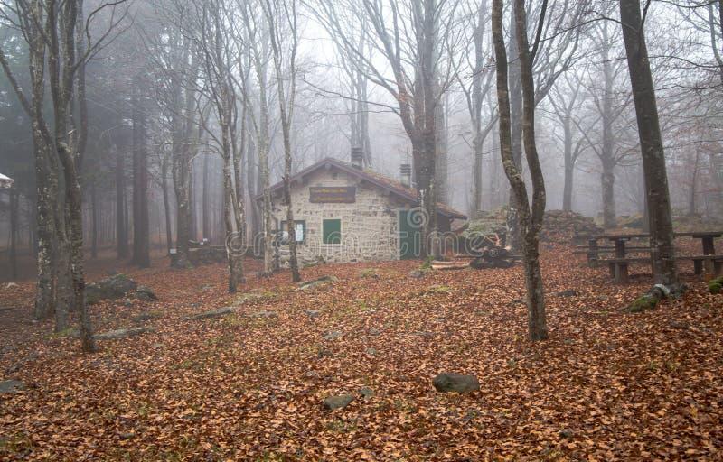 Casa isolata nella foresta dei faggi immagini stock