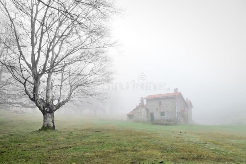 Casa misteriosa na floresta com névoa fotos de stock